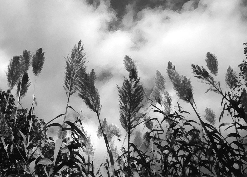 grasses gray photo by alexandria levin
